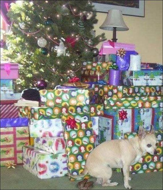 regalo-perro