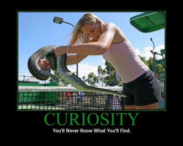 serpiente-curiosa