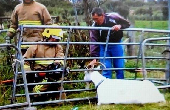 animales-rescatados-accidentes-01