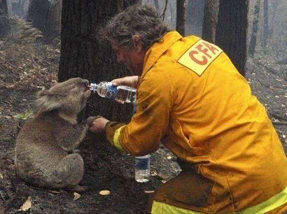 animales-rescatados-accidentes-02