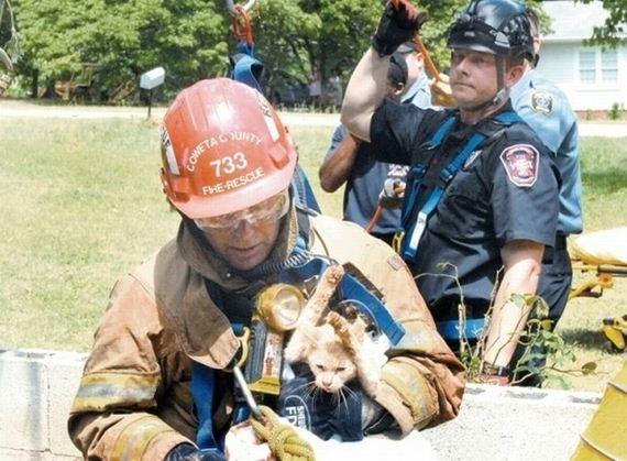 animales-rescatados-accidentes-04
