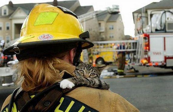 animales-rescatados-accidentes-05