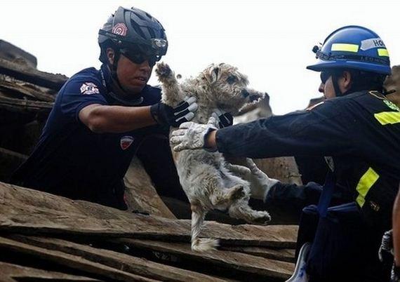 animales-rescatados-accidentes-08