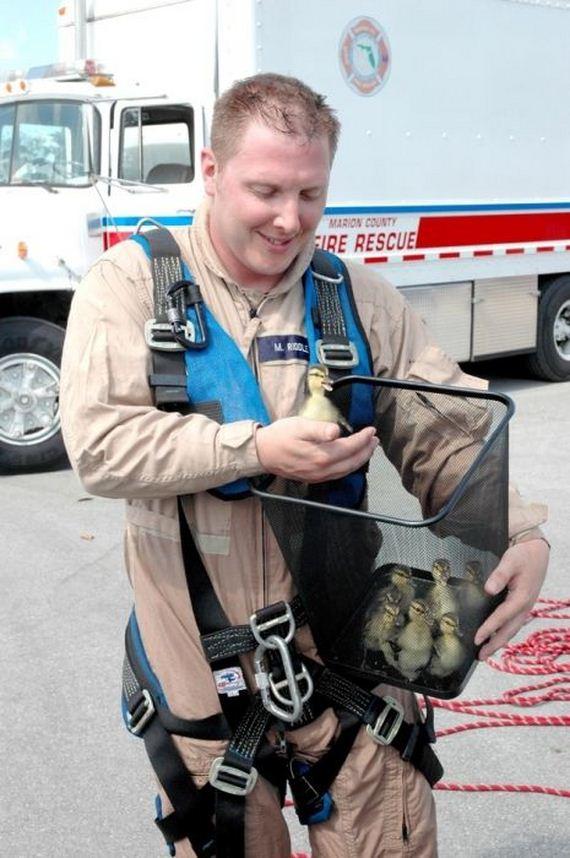 animales-rescatados-accidentes-10