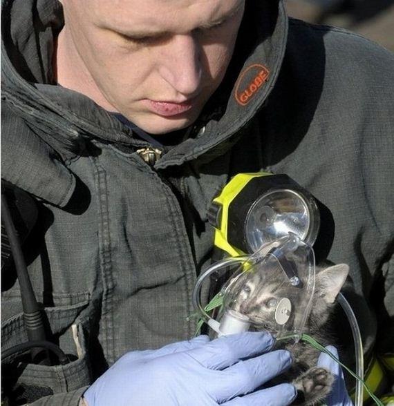 animales-rescatados-accidentes-11