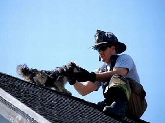 animales-rescatados-accidentes-13