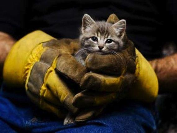 animales-rescatados-accidentes-14
