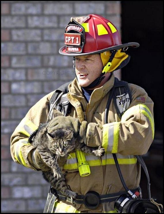 animales-rescatados-accidentes-15