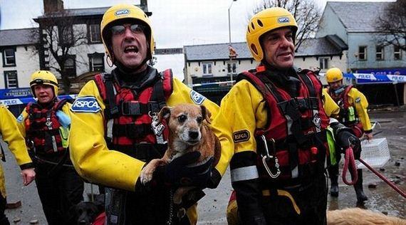 animales-rescatados-accidentes-16