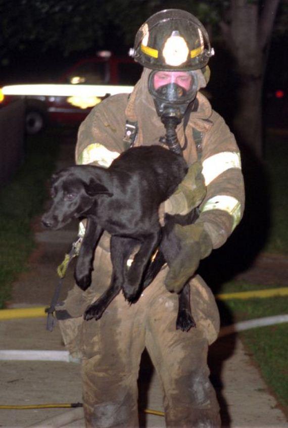 animales-rescatados-accidentes-20