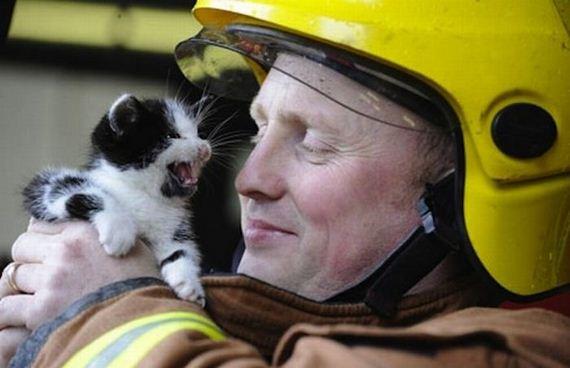 animales-rescatados-accidentes-21