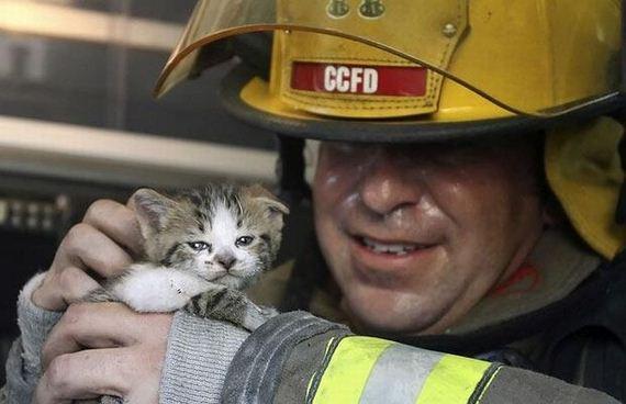 animales-rescatados-accidentes-22
