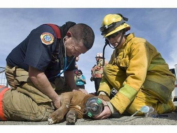 animales-rescatados-accidentes-23