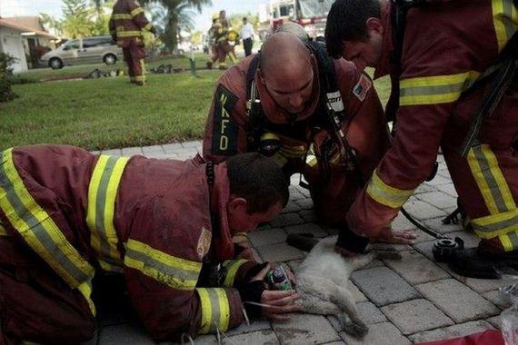 animales-rescatados-accidentes-26