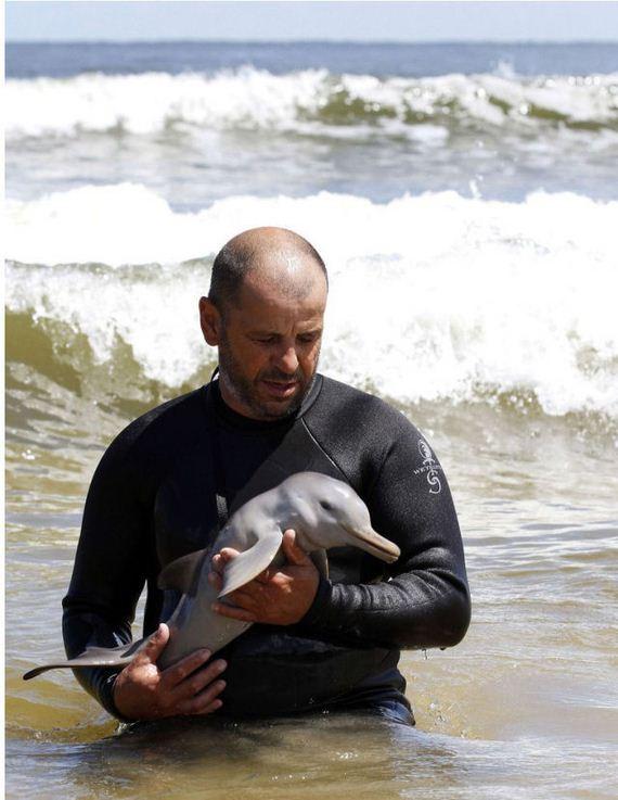 delfin-bebe-0