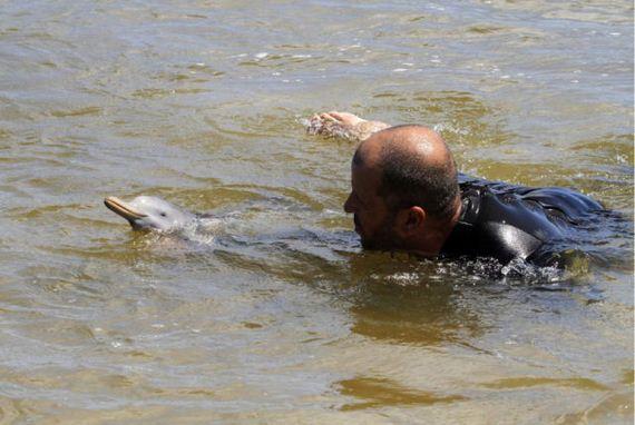 delfin-bebe-2
