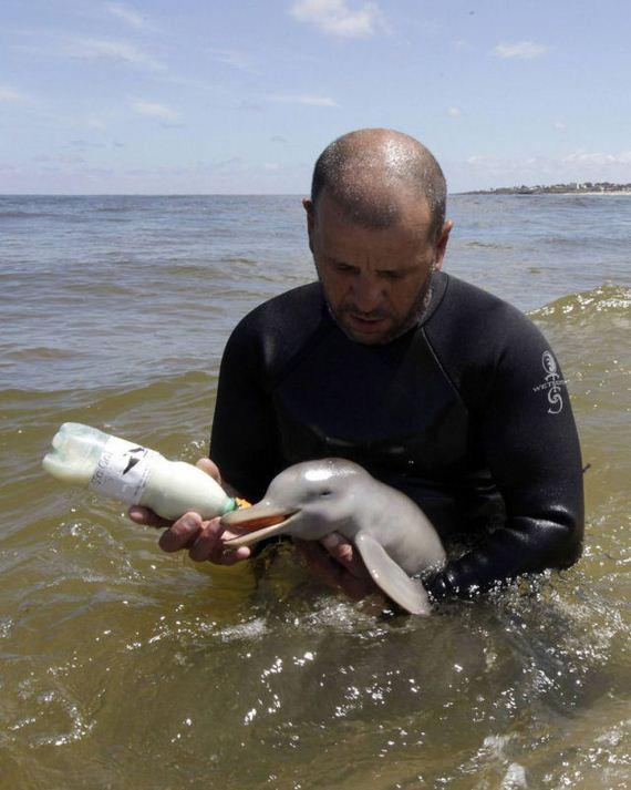 delfin-bebe