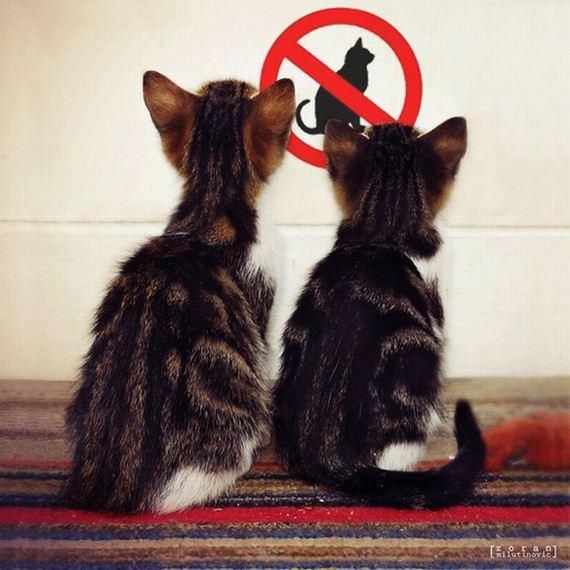 ploibido-gatos
