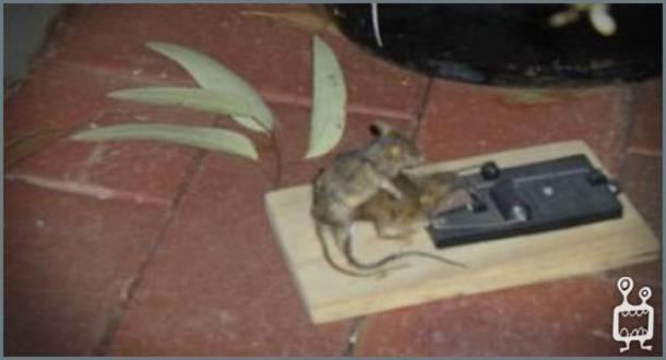 raton-necrofago
