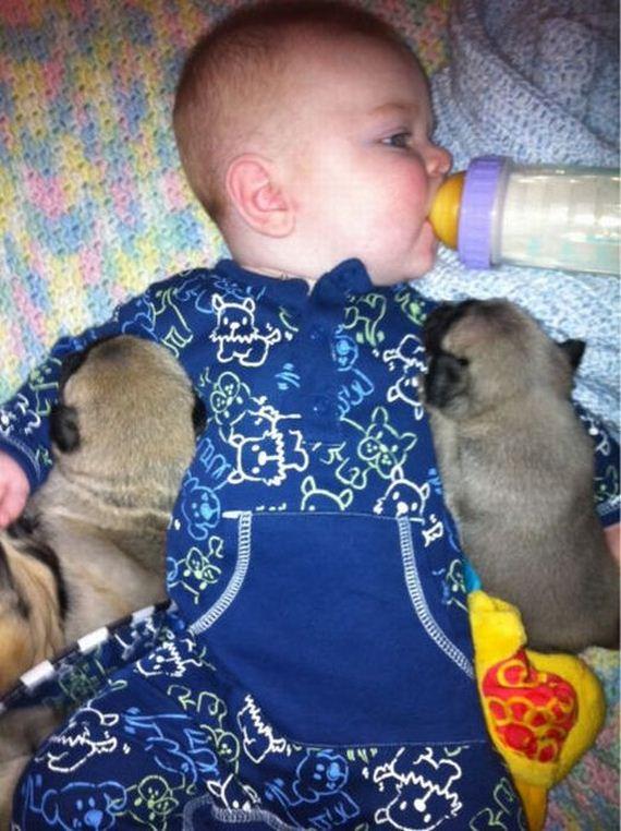 bebe-perritos