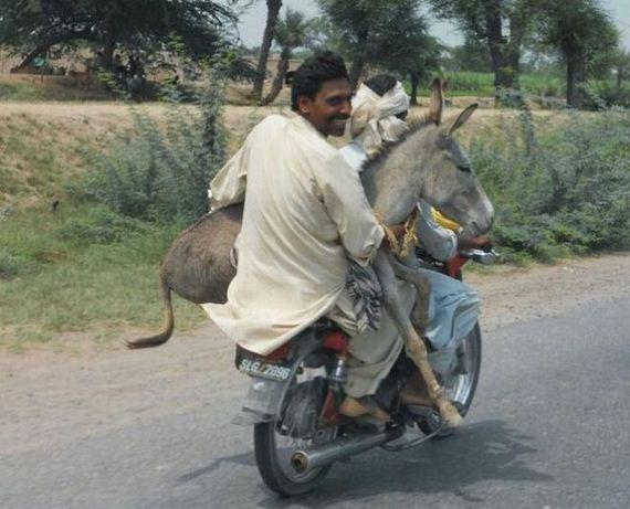 burro-moto