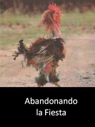 gallo-fiesta-2