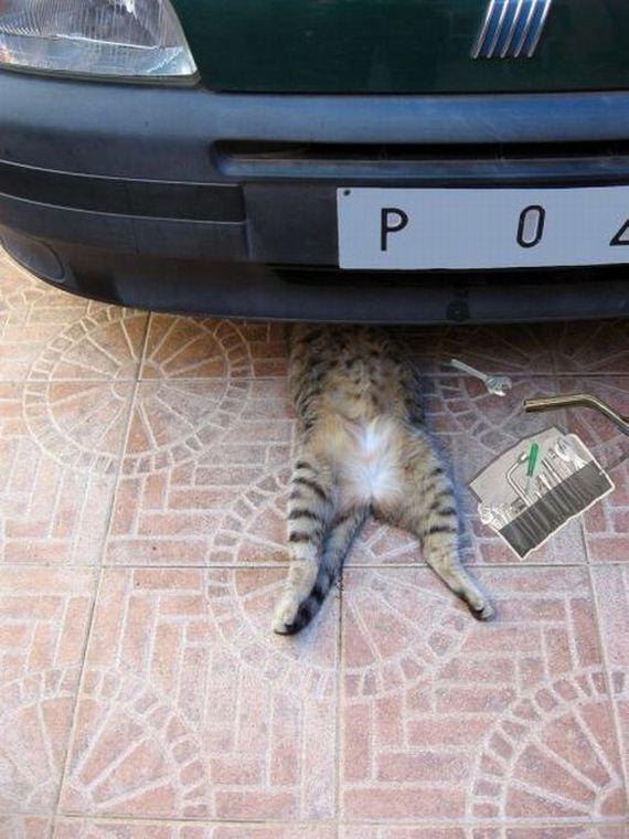 gato-mecanico