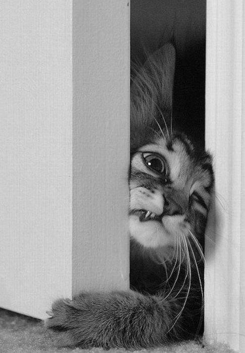 gato-problemas