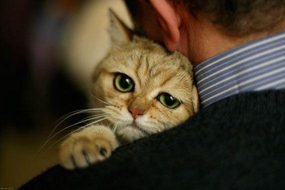 gato-tierno