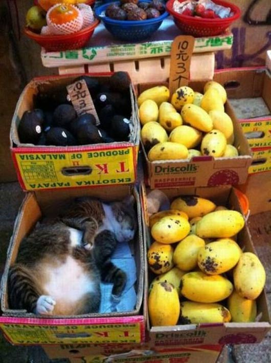gato-venta