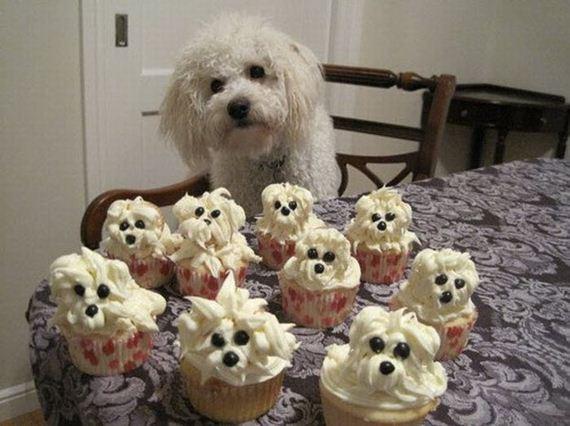 madalenas-perrito