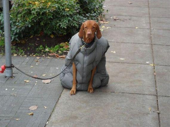 abrigo-perro