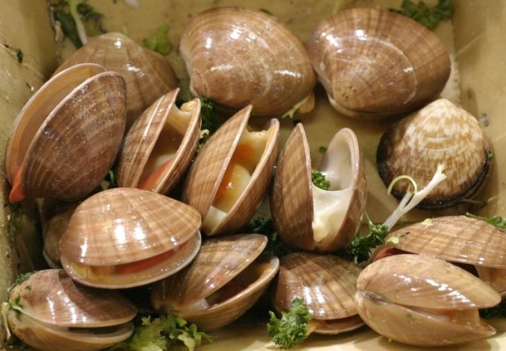 almejas molusco casqueria clams