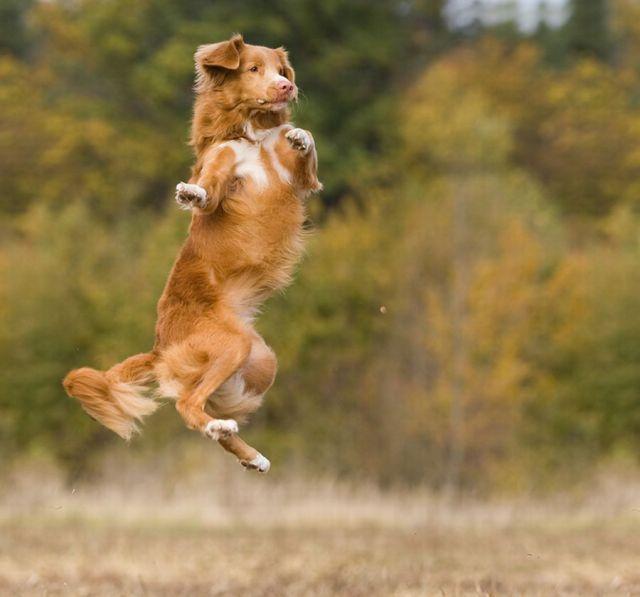 animales-y-cachorros-22