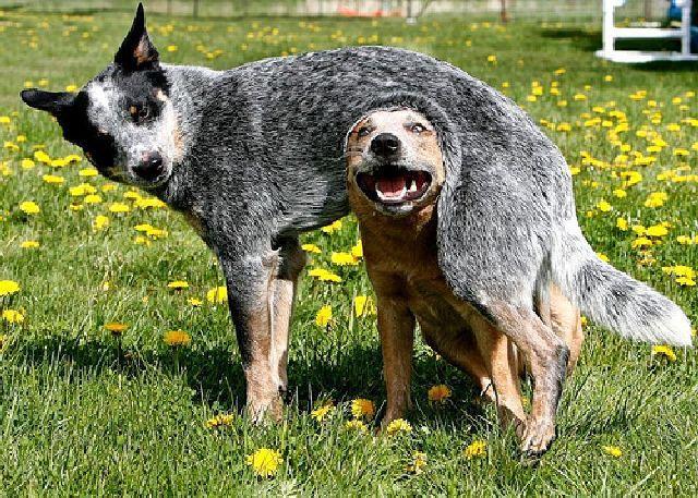 animales-y-cachorros-25