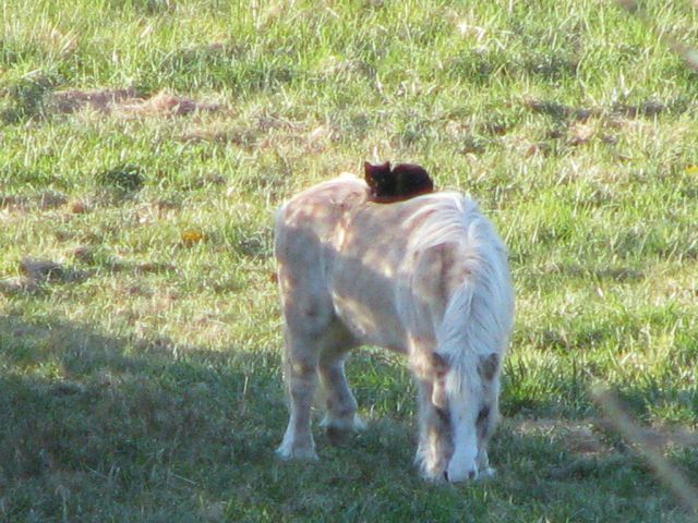 animales-y-cachorros-27