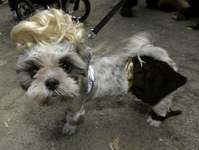 US-ANIMALS-DOGS-HALLOWEEN