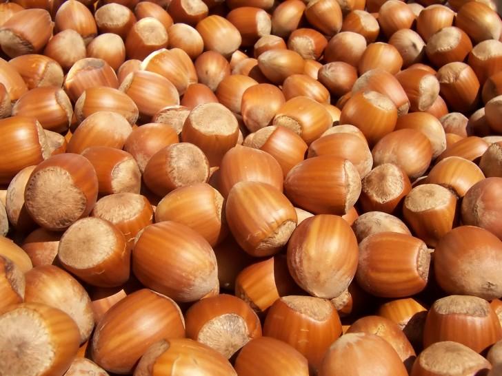 avellanas frutos secos hazelnuts