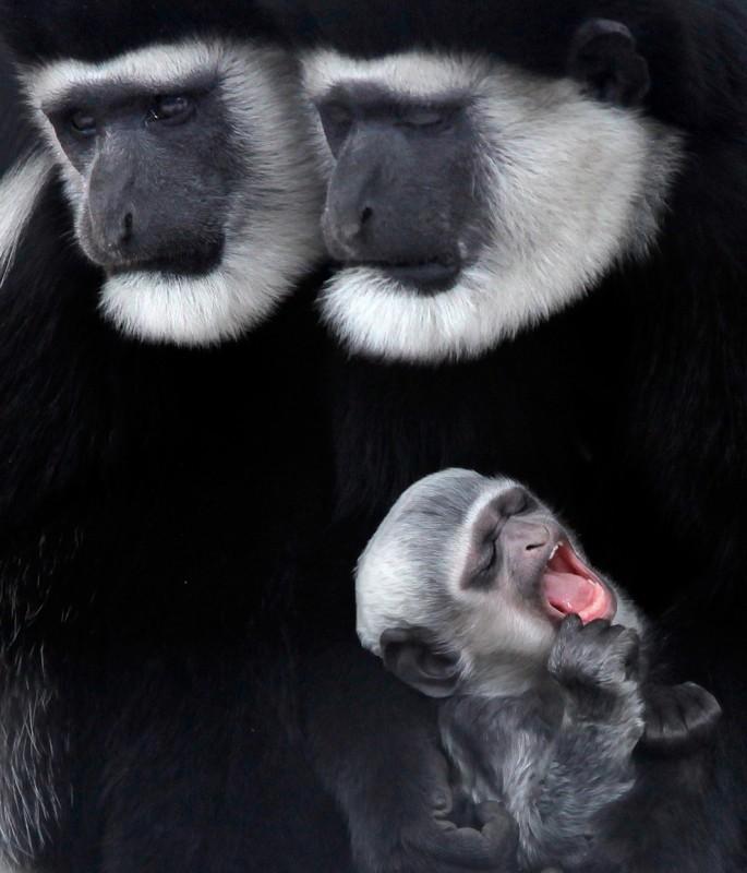 belleza imagenes animales-04