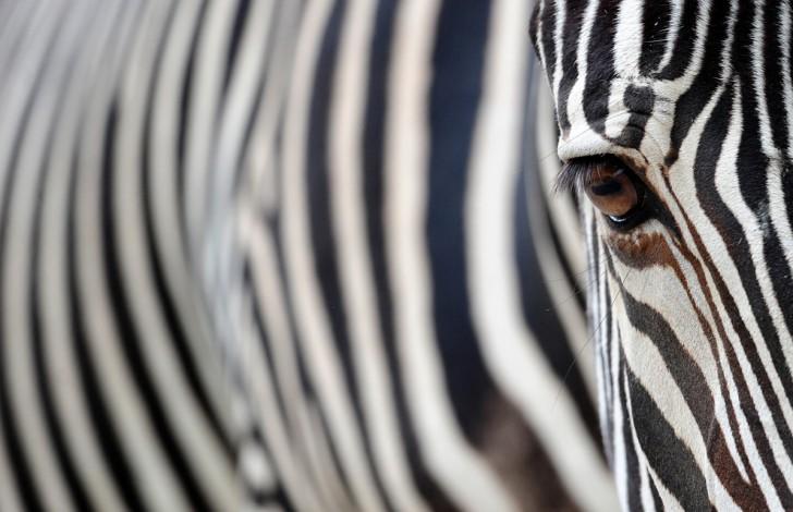 belleza imagenes animales-06