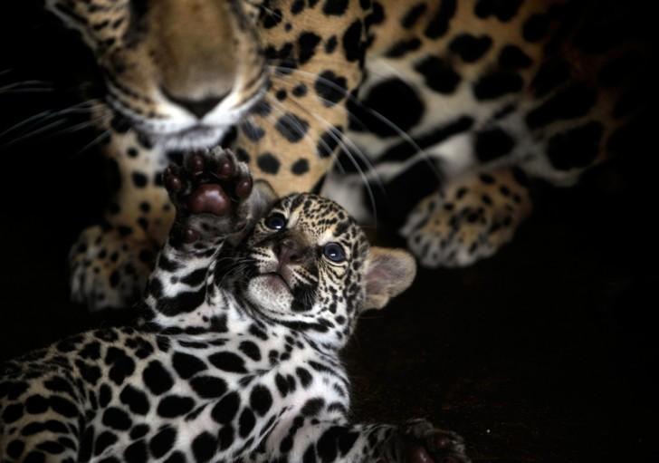 belleza imagenes animales-11
