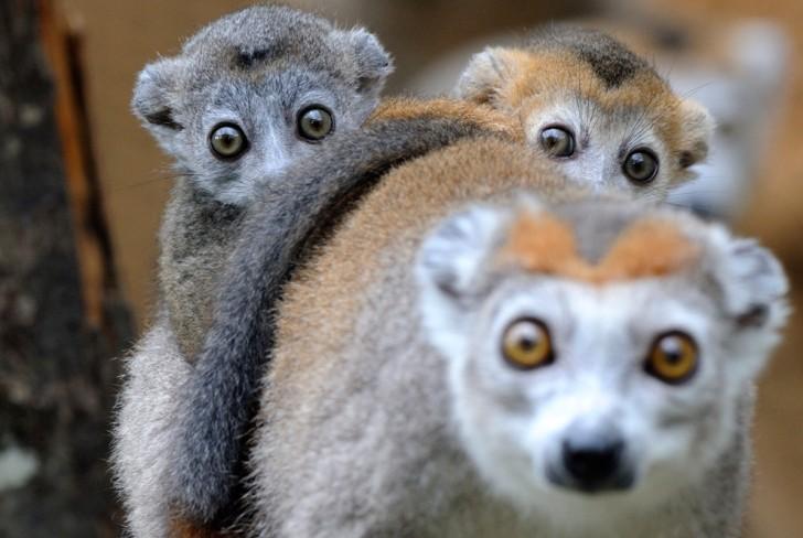 belleza imagenes animales-14