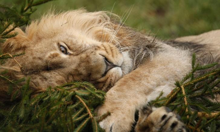 belleza imagenes animales-18