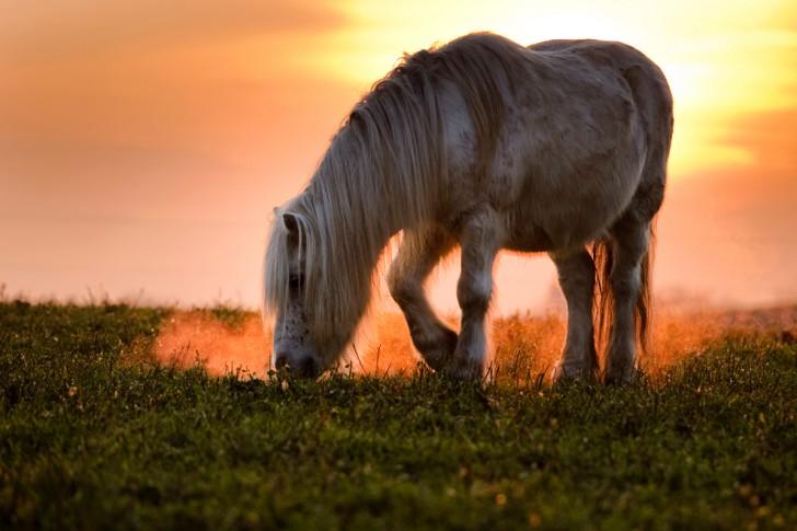 belleza imagenes animales-19