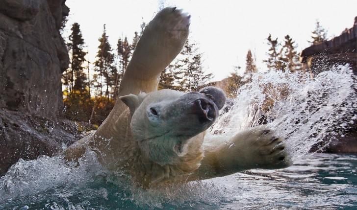 belleza imagenes animales-35