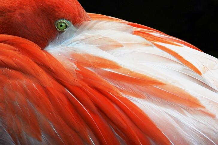 belleza imagenes animales-40