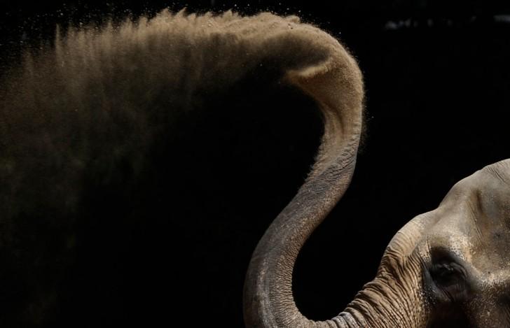 belleza imagenes animales-42