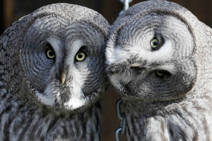 belleza imagenes animales-45
