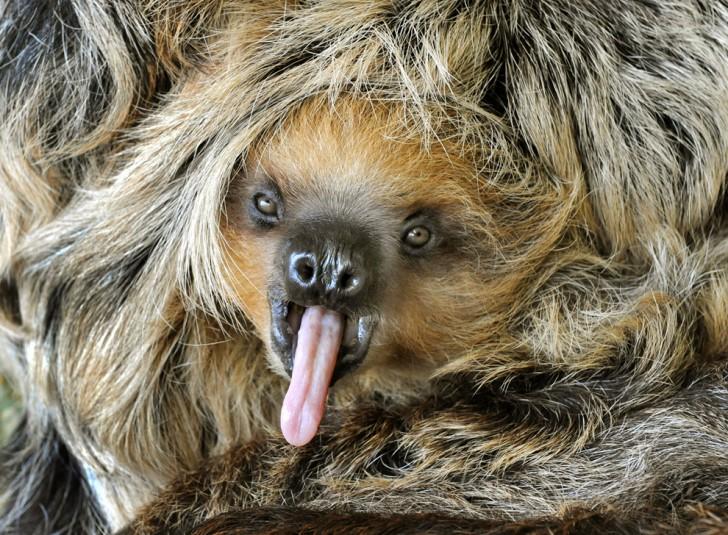 belleza imagenes animales-50