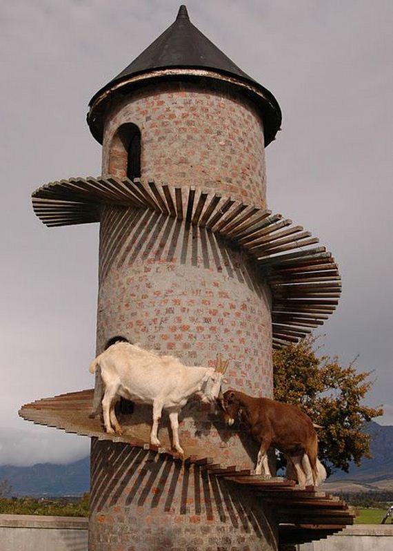 cabras-canpanar